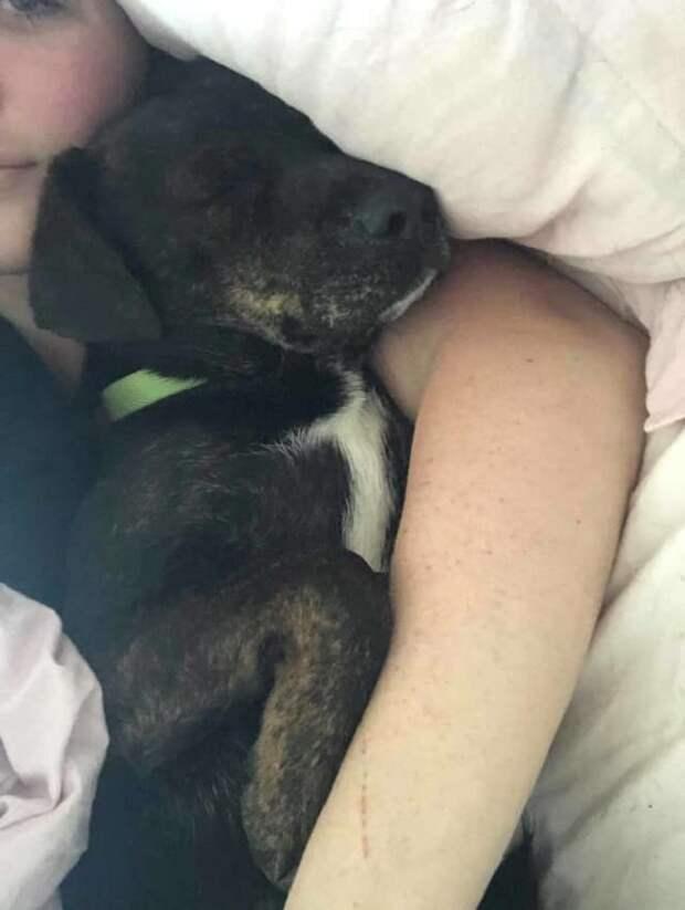 Отправляясь в приют, чтобы спасти от эвтаназии собаку, девушка не знала, что ее жизнь изменится