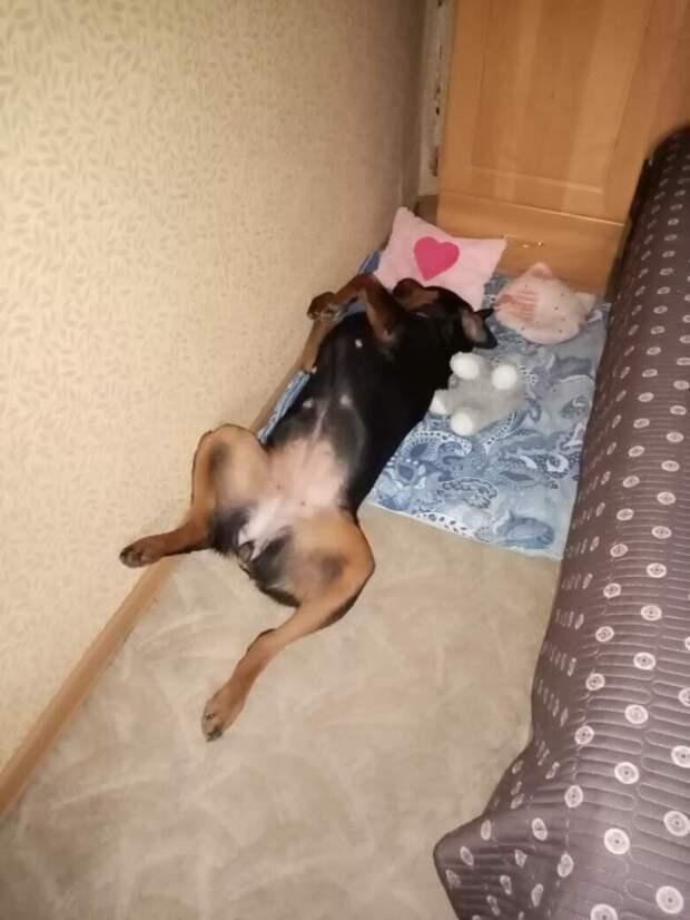 Надоевшая живая игрушка. Собака Дейзи «до» и «после»