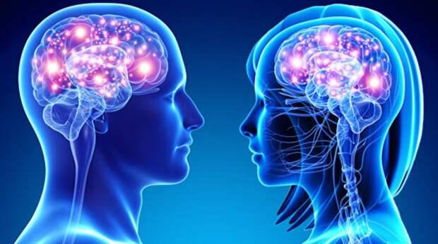 Ученые рассказали об отличиях в размерах мужского и женского мозга
