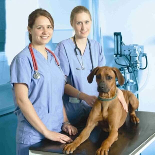 Учимся распознавать защемление нерва у собаки и оказывать помощь питомцу