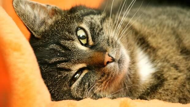Ветеринар разъяснила, как защитить животных от блох во время летней жары