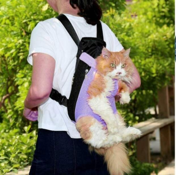 А у вас правильная переноска для кошки?