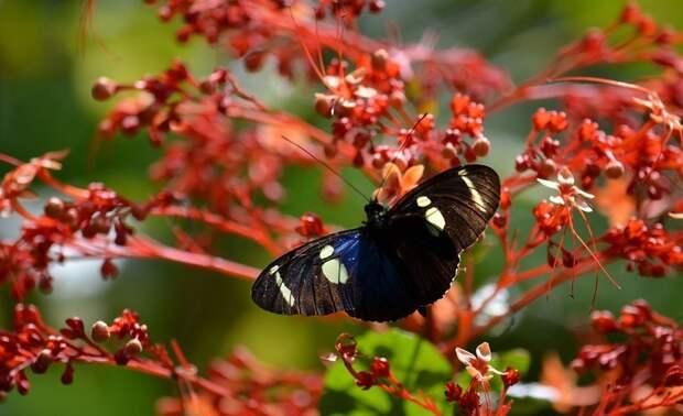 Amazonas27 Большое фотопутешествие по лесам Амазонки