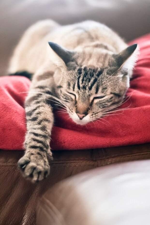 6 фактов о кошках,которые повергнут вас в шок