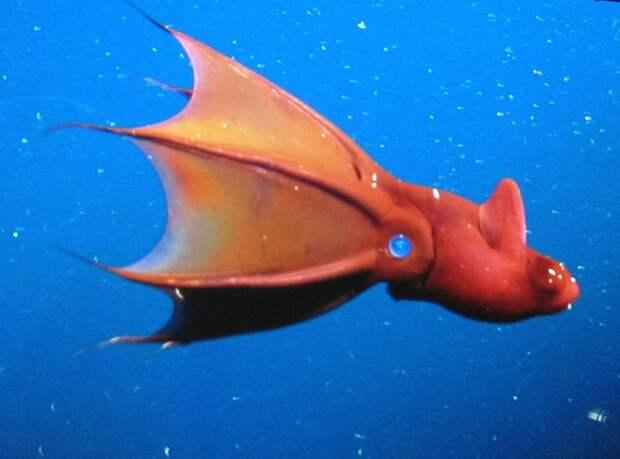 Так ли страшен адский кальмар, как его название?