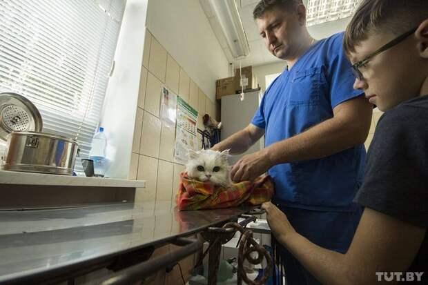 Андрей Локатун осматривает пациента — кота Вениамина ветеринар, животные, история, спасение