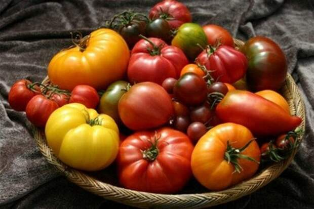 Топ-10 целебных свойств томатов