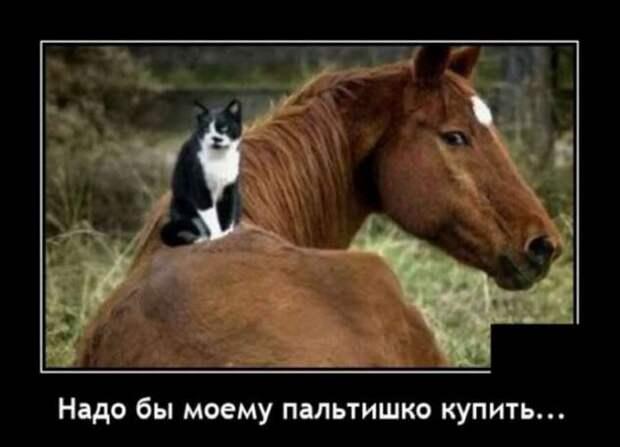 5402287_zabavatutza64719051910202013 (633x457, 23Kb)