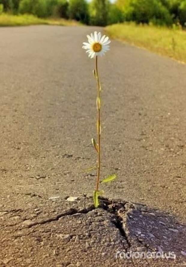 Сделаем мир добрее! фотоподборка