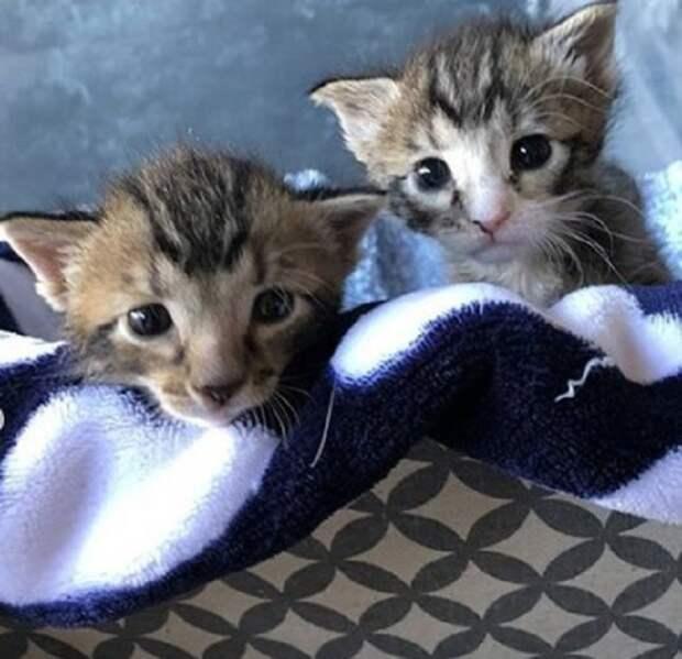 Новорожденных котят нашли в машине на заднем сидении. Мама-кошка оставила их там и ушла