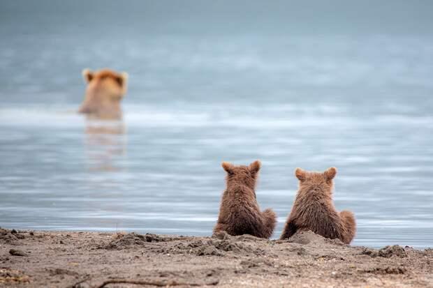 Шикарные и красочные фотографии про животных