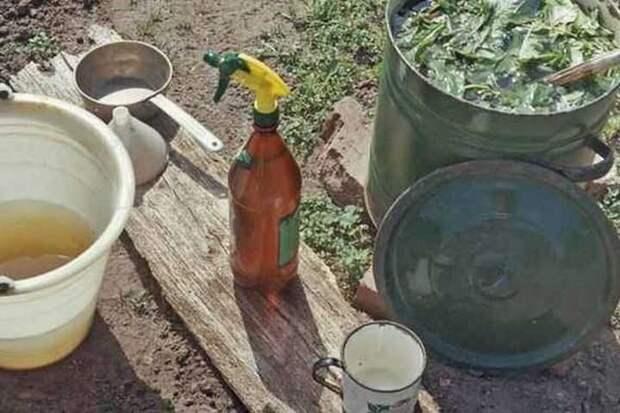 Народные рецепты настоев и отваров для борьбы с болезнями и вредителями сада и огорода