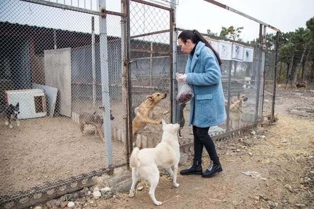 В Крыму бездомным собакам подарили 40 будок