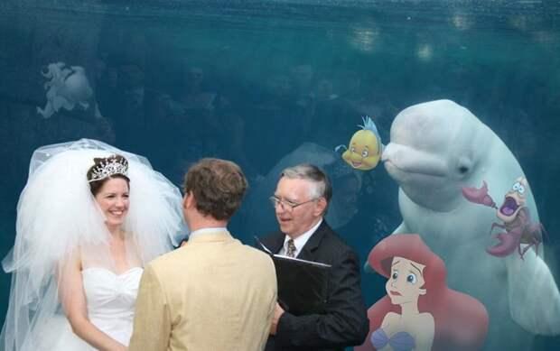Белуха попала в кадр жениха и невесты, украсив собой свадебный снимок