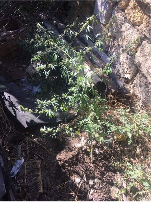 У крымчанина нашли и изъяли коробку с наркотиками