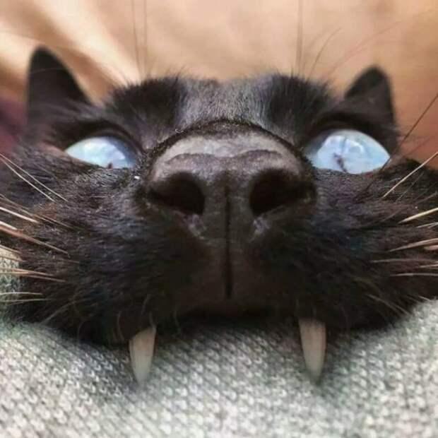 Подборка прикольных, забавных и веселых котиков для улыбки