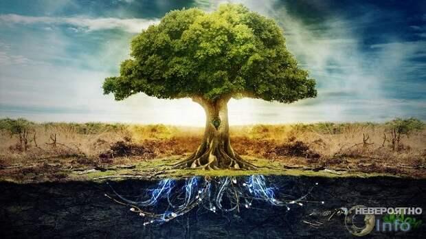 На чём растёт дерево?