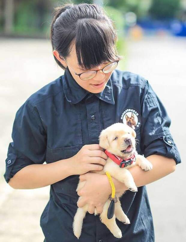 Полиция Тайваня выложила очаровательные фото принятых на работу щенков лабрадора