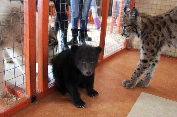 Сначала Алена воспитывала медвежат. Фото: ПЫХАЛОВА Юлия (архив)