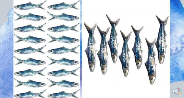 Какая рыба самая полезная: 12 видов, которые стоит включить в свой рацион