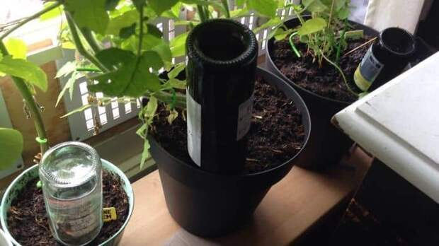 34. На случай, если вас долго не будет дома - бутылки с водой могут поить растения несколько дней гениально, для дома, идеи, подборка, полезное, полезные идеи, советы, хитрости
