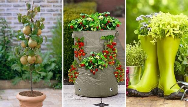 Огород без забот: 5 практичных советов, как создать контейнерный огород или мобильный фруктовый сад
