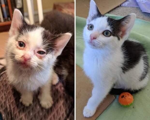 1. «Когда я нашла эту сладкую кошечку месяц назад, она еле могла видеть своими повреждёнными глазками. А теперь она полностью здорова, счастлива и готова жить в своём новом доме!» в мире, добро, животные, забота, кошка, собака, спасение, тогда и сейчас