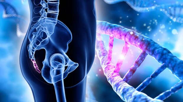 Генетики выяснили, как наши предки потеряли хвост