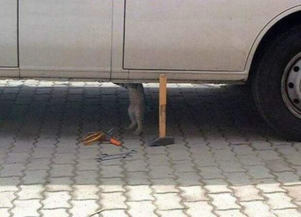 Кот автомеханика.