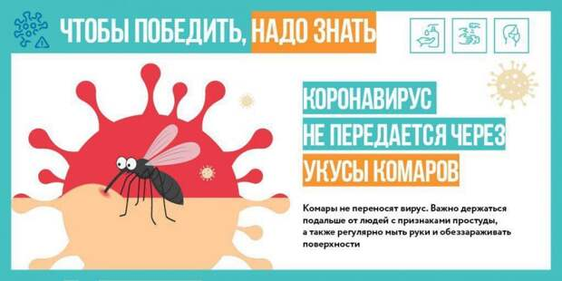 Комары не переносят коронавирус