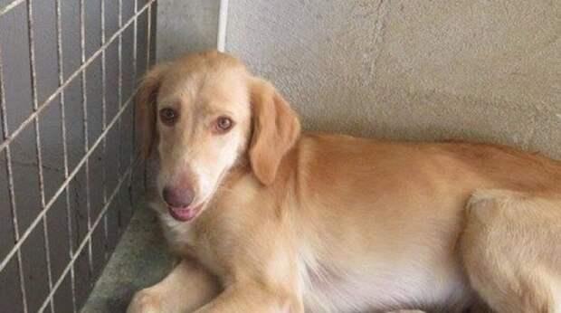 Километры не помеха: увидев на фото собаку, женщина решила забрать ее к себе