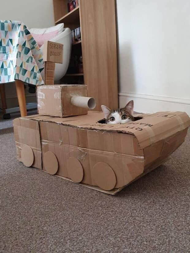 Этим 11 людям настолько скучно на карантине, что они построили котам танки