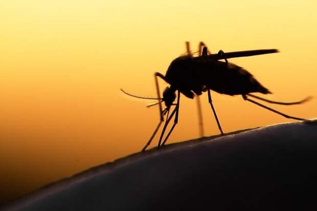 10 примеров использования насекомых на войне