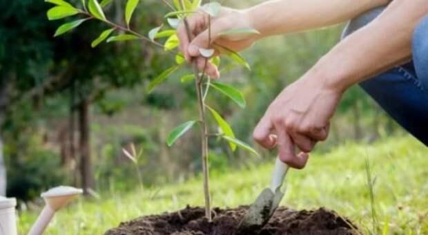 Беспроцентный кредит за охрану и посадку новых деревьев