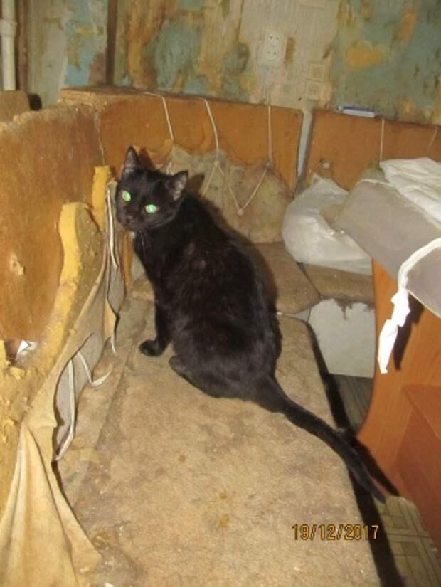Калуга: квартиранты этой квартиры – 38 котов! Все они заперты в одной комнате, волонтёры в отчаянии…