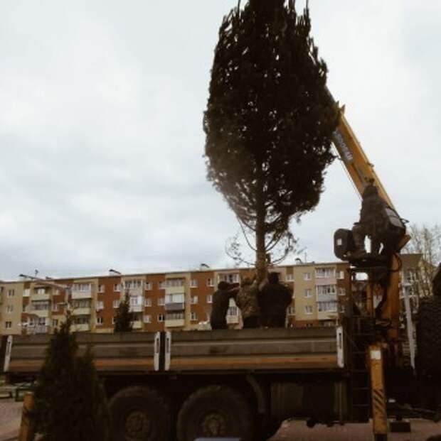В парке на Марата высадили хвойные деревья