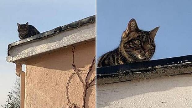 Воришка забрался в дом и испортил рождественский ужин, но наказать его не вышло, ведь он всего лишь кот