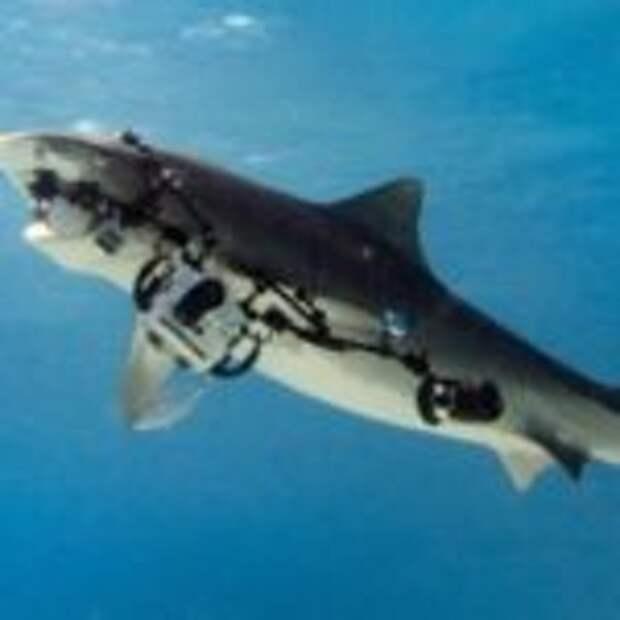 Акула похитила камеру