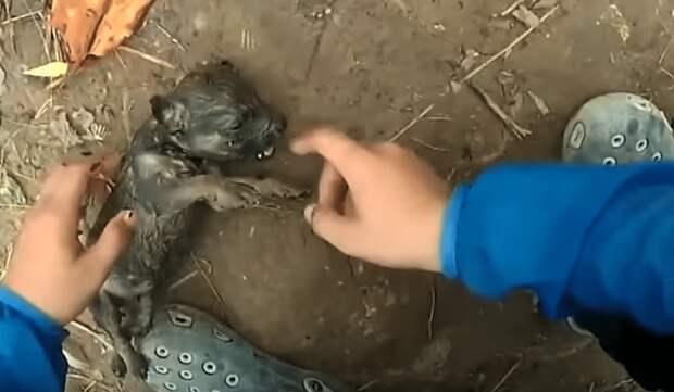 реанимация щенка