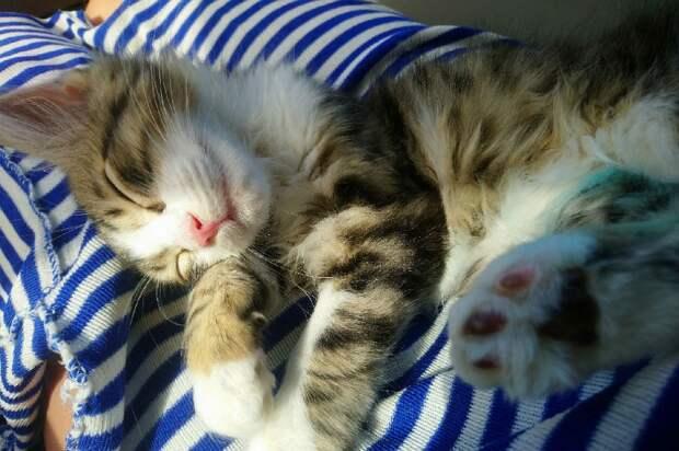 У котенка нашли перелом лапки и разрыв уретры. Фото: Алена Победина
