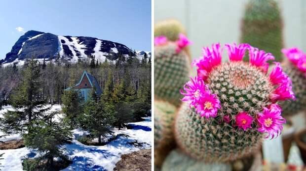 Как выглядит ботанический сад в Арктике?