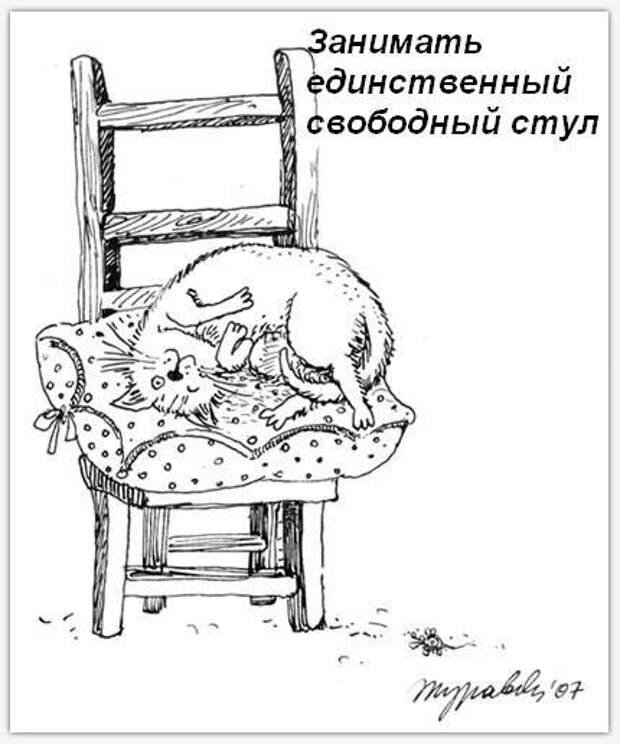 Обязанности кота по дому (9 фото)
