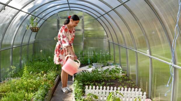 Затемнение и проветривание смогут спасти урожай от перегрева