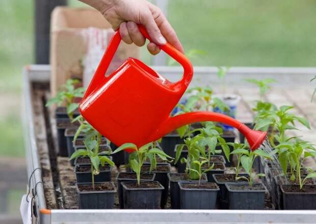 12 культур, которые обязательно нужно посадить в марте на рассаду