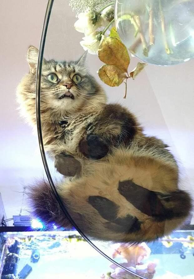 И незачем так пугать! котики, коты, милота, мотики, сквозь стекло