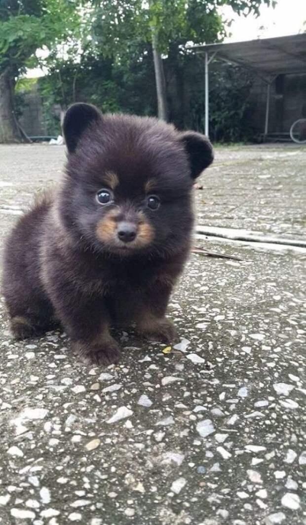9. Медвежонок животные, настроение, очарование, подборка, собака, фотография, щенок