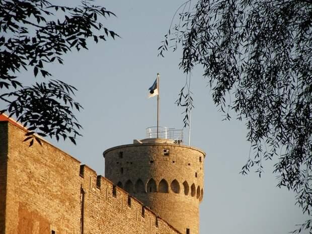 Объявлены предварительные итоги парламентских выборов в Эстонии