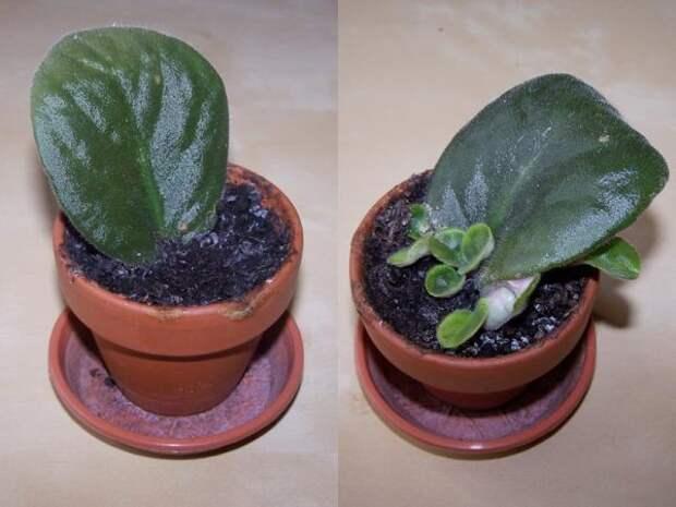 цветочный горшок с землёй и растением