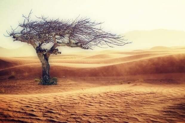ООН: миллионам людей грозит преждевременная смерть из-за изменения климата