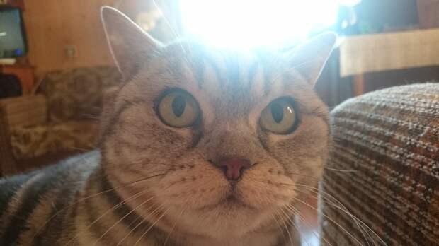 20+ фактов о психологии и характере кошек, которыми поделился заводчик со стажем